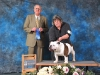 First in Veteran Dog Class