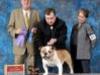Winners Dog and Best of Winners